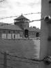 Generica - Auschwitz