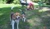 Castano Primo - Si pensa ad un'area a disposizione dei cani (Foto internet)