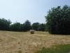 Generica - Campo coltivato