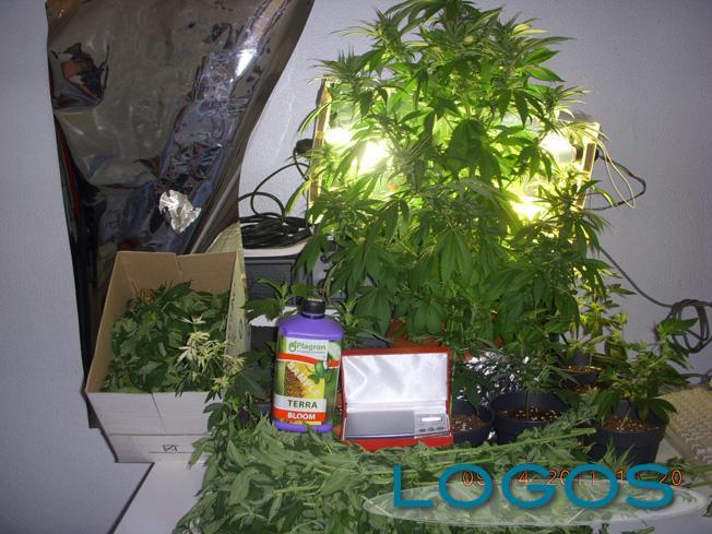 San Vittore Olona - Marijuana in casa