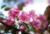Generica - Fiori di primavera