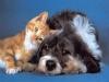 Marcallo con Casone - Cani e gatti: c'è il concorso