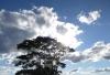 Meteo - Nuvole nel cielo