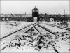 Generica - Auschwitz (da internet)