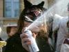 Galliate - Divieto di vendita delle bombolette spray (Foto internet)