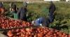 Inchieste - Lavoratori stranieri nelle aziende agricole (Foto internet)
