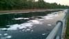 Nosate - Il Canale industriale: schiuma in acqua