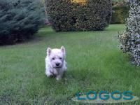 animalogos_rudy.JPG