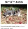 Castano Primo - Trovato micio, agosto 2017
