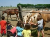 Attualità - Bambini in... fattoria (Foto internet)