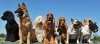 Inveruno - Esposizione canina per la Fiera