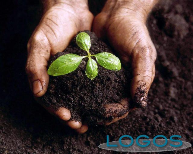 Attualità - Agricoltura e industria alimentare insieme con 'Filiera Italia' (Foto internet)