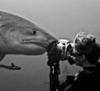 Inveruno - Raffaele Schlegel la 'signora degli squali' (Foto internet)