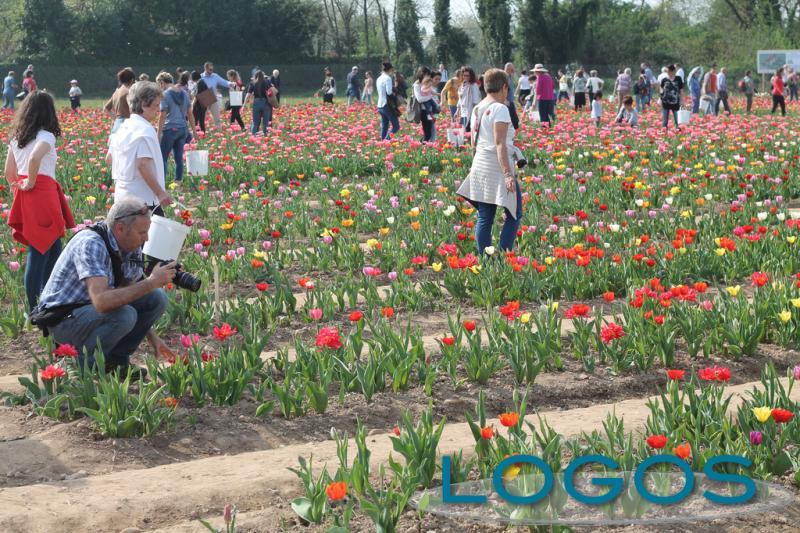 Eventi - Tulipani a Cornaredo