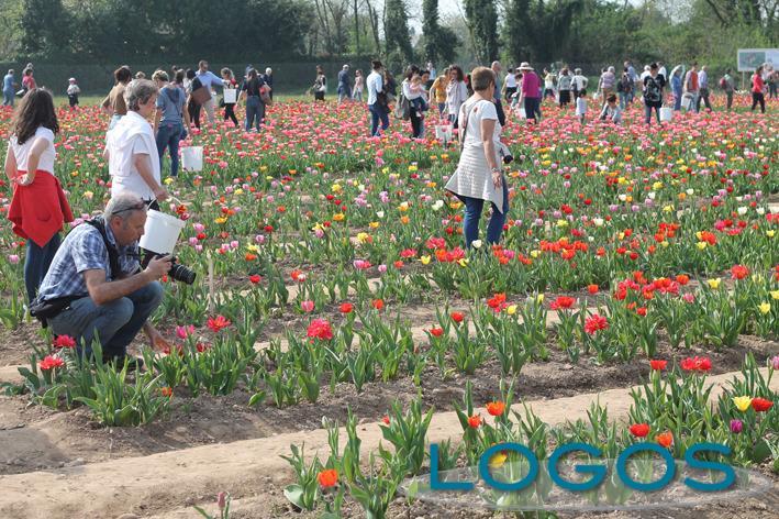 Eventi - Tulipani italiani