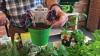 Energia e Ambiente - Orto: passione da coltivare (Foto internet)