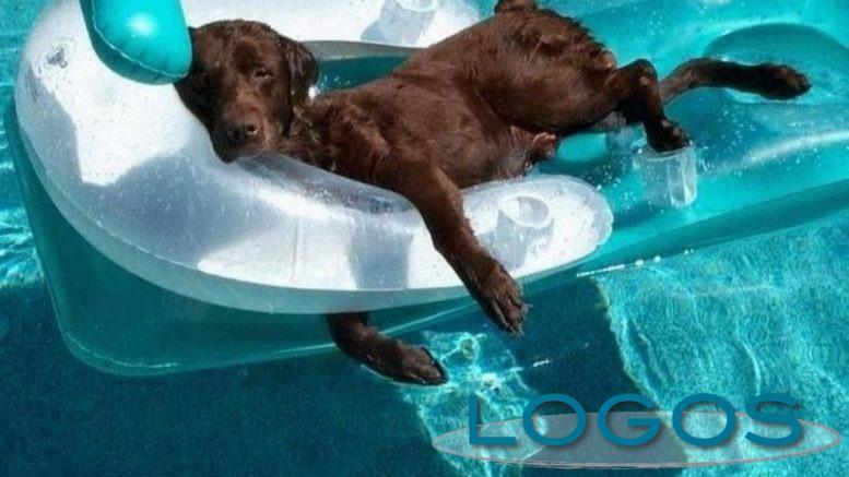 Attualità - Cani in piscina (Foto internet)
