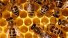 Attualità - Api e miele (Foto internet)