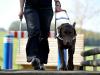 Attualità - Cani guida per non vedenti (Foto internet)