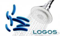 Generica - Legionella (da internet)