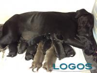 Storie - Un parto eccezionale: 16 cuccioli