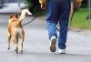 Attualità - Corsi per i proprietari dei cani (Foto internet)