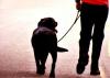 Attualità - Cani e padroni: relazionarsi e crescere insieme (Foto internet)