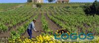 Attualità - Agricoltura (Foto internet)