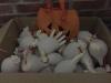 Nosate - Halloween (Foto internet)