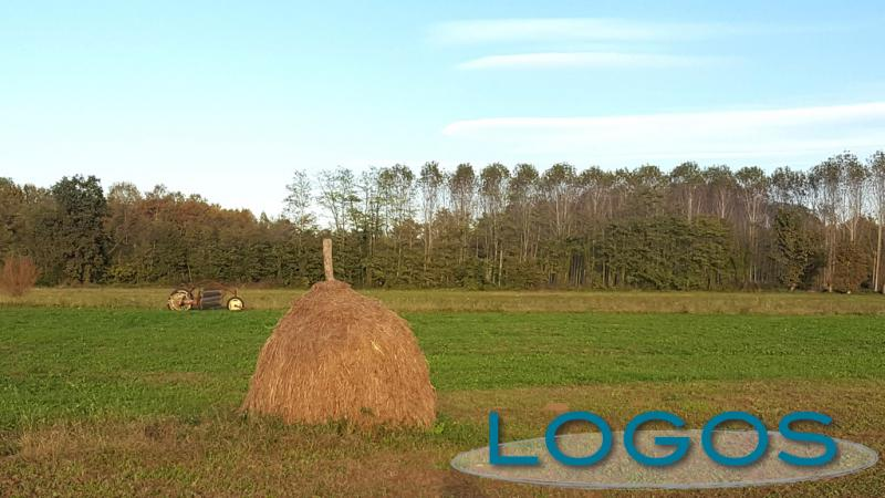 Territorio - Agricoltura