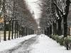 Meteo Sincero - Inverno a Cuggiono