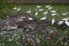Territorio - Schiume e sporcizia nei nostri fiumi e canali