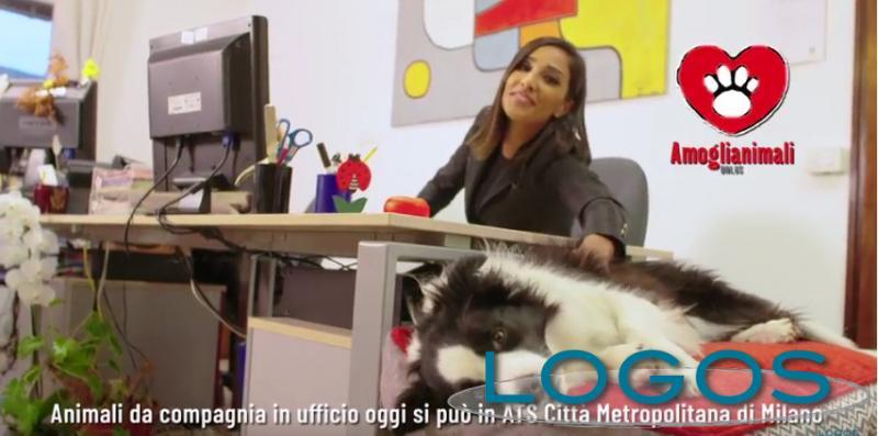 Milano - Animali da compagnia adesso in ufficio con i loro padroni