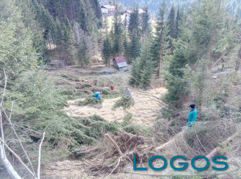 Sociale - 'Fai nascere un bosco nuovo' (Foto internet)