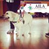 Castano Primo - La disabilità spiegata agli studenti grazie ad AILA