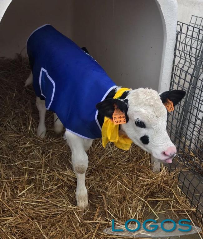 Attualità - Cappottini per proteggere gli animali più piccoli dal freddo