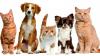 Attualità - Cani e gatti (Foto internet)