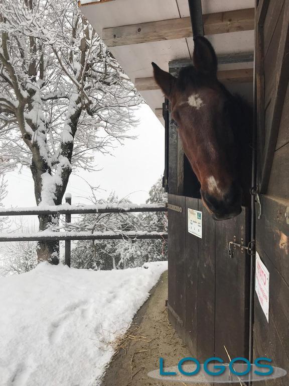Attualità - Neve, manna per le campagne