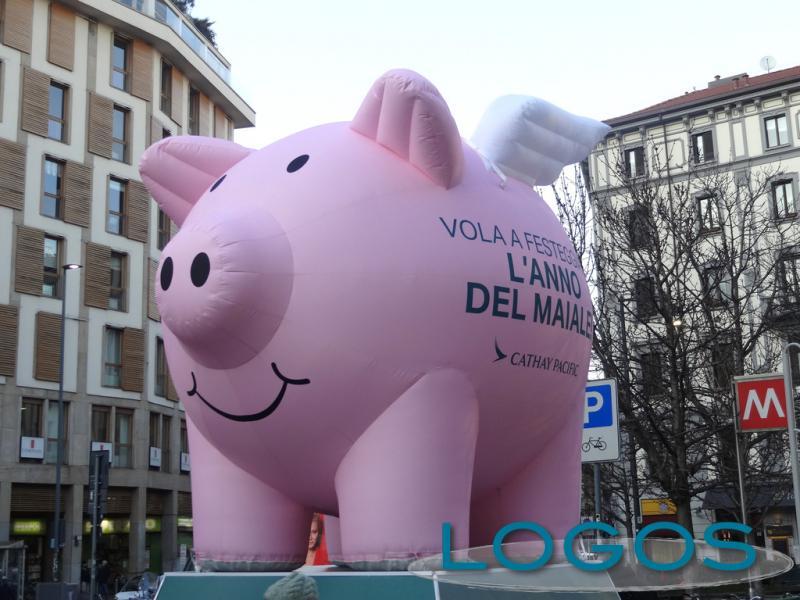 Attualità - L'anno del maiale (Foto internet)