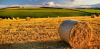 Attualità - Imprese agricole (Foto internet)