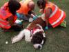 Territorio - L'ambulanza veterinaria