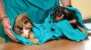 Cuggiono - Avvelenamenti di cani e gatti: incontro (Foto internet)
