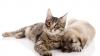 Territorio - Cane e gatto (Foto internet)