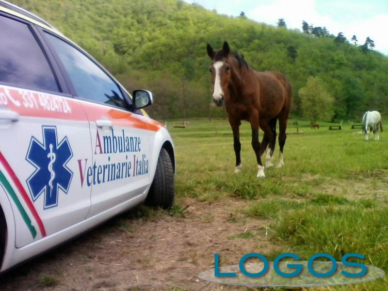 Salute - Ambulanze veterinarie