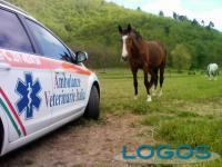 Salute - Ambulanze veterinarie