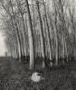 Libri - 'Tre', il romanzo di Marino Bottini (Foto internet)
