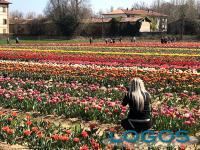 EXPOniamoci - Lo spettacolo di Tulipani Italiani