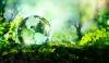 Rubrica 'Solo cose belle' - Giornata Mondiale dell'Ambiente (da internet)