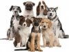 Eventi - Cani (Foto internet)