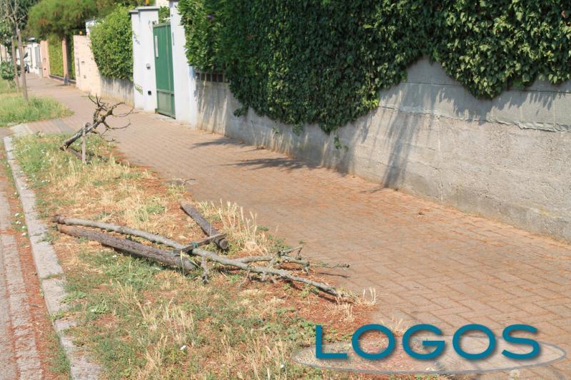 Cuggiono - Via Roma, alberi abbattuti